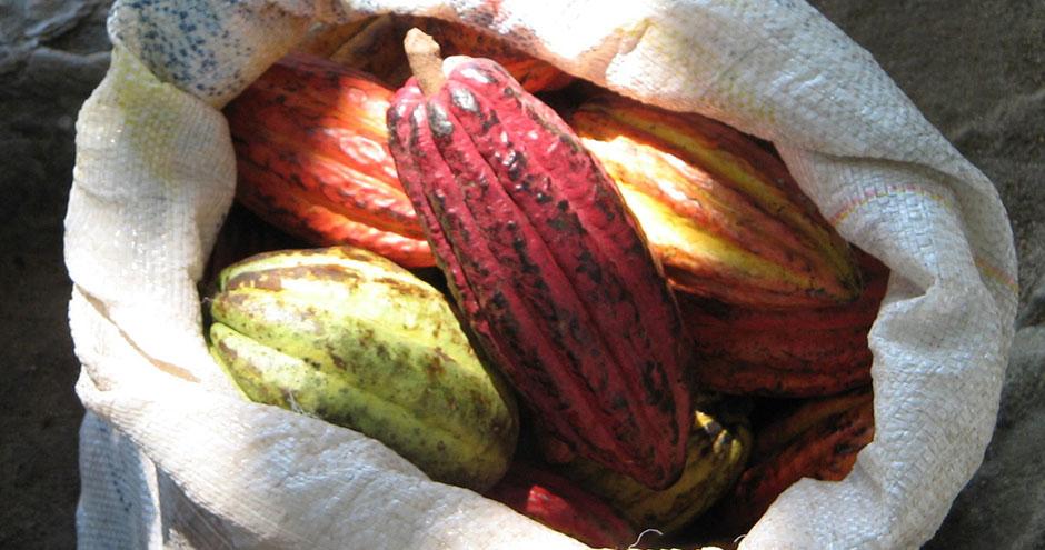 Kakaoböna